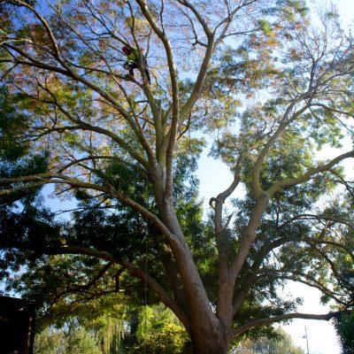 Tree Pruning 2