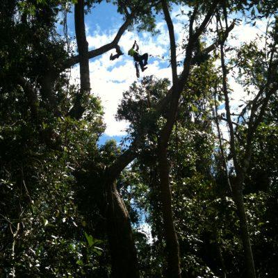 Tree Pruning 4