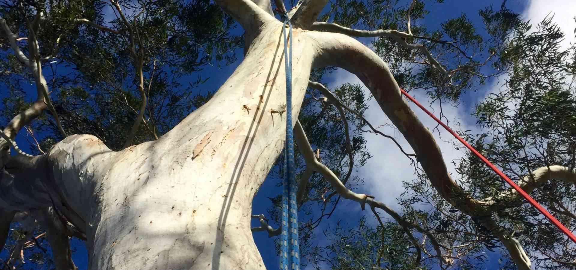Tree Pruning__1501812451_115.70.206.58