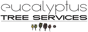 Eucalyptus Tree Services